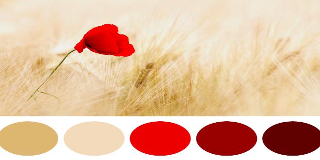 palette colori complementari 1024x878 1